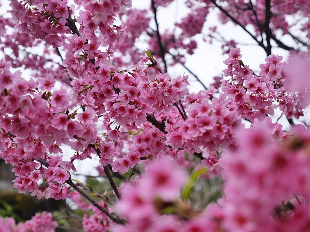 【台北賞櫻景點】中正紀念堂 捷運站旁近萬坪的賞櫻景點(2021.2.10花況) @Maruko與美食有個約會