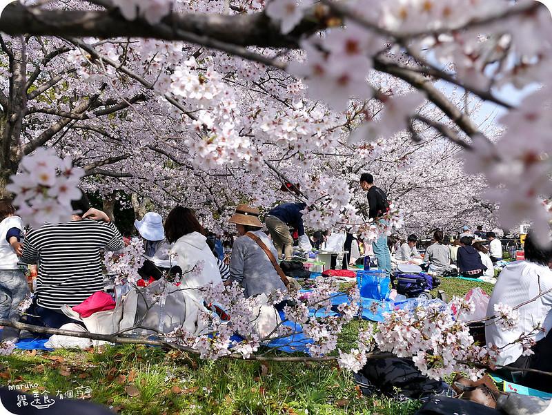 【福岡賞櫻】五個福岡地區絕佳賞櫻可以野餐景點行程規劃安排 @Maruko與美食有個約會