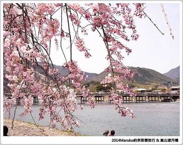 【京都賞櫻】嵐山渡月橋|河川邊野餐欣賞櫻吹雪的春天美景 @Maruko與美食有個約會