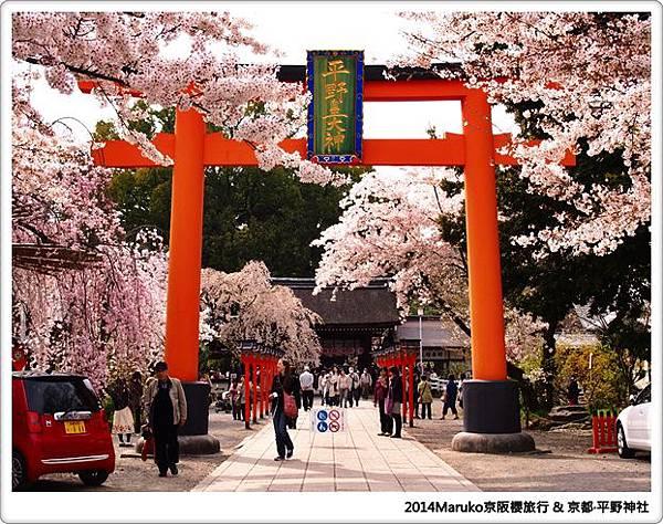 【京都賞櫻】 平野神社|美麗的櫻花美景還巧遇食尚玩家錄影 @Maruko與美食有個約會